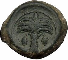 Carthage in Zeugitana 300BC RARE Ancient Greek Coin Horse Palm tree  i52360