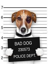 JACK RUSSELL DOG MUGSHOT POLICE BAD PHOTO ART PRINT POSTER PICTURE BMP2038A