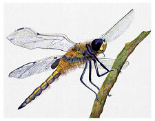 A4 Dragonfly Insect Watercolour Painting Signed Ltd Edition Print Easter Gift
