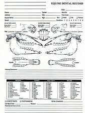 Equine Dental Chart for Equine Dentistry and Veterinary Professional
