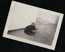 Vintage Antique Photograph Adorable Black Cat Laying on Hardwood Floor in Hall