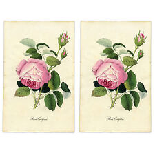 2 Shabby Chic Vintage Victorian Stickers / Decal repro floral botanical