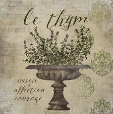 French Herbs Thyme 24x24 Print Giclee Edition by Beth Albert
