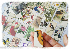 32 Vintage Bird,Flower paper ephemera,scrapbook ephemera art,Snailmails,Card