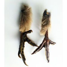 2x Foot Grouse taxidermy biology wicca goth jewellery art crafts crow feathers