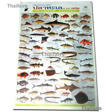 MARINE FISHES POSTER FOR THE HOME COLOURFUL WALL CHART WORLD OF SEA FISH POSTERS
