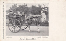 * UK ENGLAND - London - Llama and Cart, Regent's Park