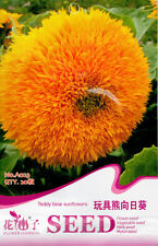 20 Original Package Seeds Toy Bear Sunflower Seeds Helianthus Annus A023