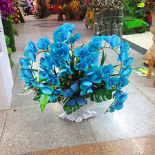 Rare Orchid Bonsai Balcony Flower Blue Butterfly Orchid Seeds Beautiful-200 PCS