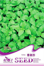 50 Original Pack Seeds Catnip Seeds Nepeta Cataria D041