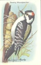 Church & Dwight - Useful Birds of America, 9th Series - 7 - Downy Woodpecker