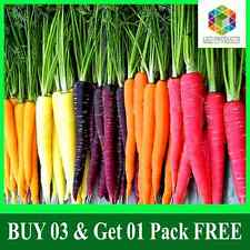 Rare HEIRLOOM RAINBOW CARROT 02 Professional Packs With 200 Mixed Non GMO Seeds