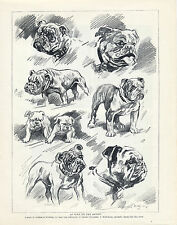 ENGLISH BULLDOG VARIOUS ARTIST IMAGES ON AN ORIGINAL DOG PRINT PAGE FROM 1934