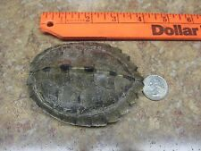 Turtle Shell Map Turtle SMALL Crafts Necklaces and More #M15