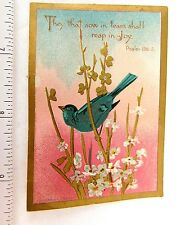 Superb They That Sow in Teams Shall Reap in Joy Bird Flowers Psalm 126 Bible F50