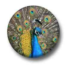 Peacock 1 Inch / 25mm Pin Button Badge Tail Plumage Cute Show Off Birds Kitsch