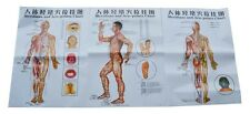 Acupuncture Points andAcupuncture Human Body Charts Meridians-3 Poster Charts