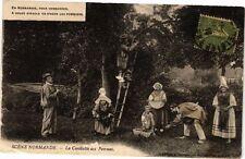 CPA Scenes Normandes - La Cueillette des Pommes (250117)