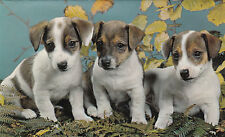 Vintage Happy Birthday Jack Russell Puppy Dogs Greeting Card & Envelope