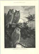 1890 Three Heads Better Than One Conference Of Horned Owls Koch Cure