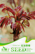 1 Pack 40 Chinese Toon Seeds Red Oil Toona Sinensis Garden Vegetable C005