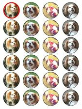 X24 CAVALIER KING CHARLES SPANIEL DOG CUP CAKE TOPPERS ON EDIBLE RICE PAPER