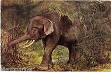 Elephant, Tuck Oilette postcard by George Rankin, posted