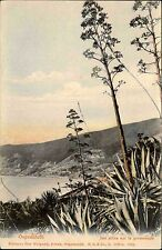 Ospedaletti Italien Ligurien AK ~1900 Alöes sur la promenade Pflanzen Botanik
