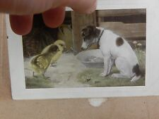 Postcard Jack Russel and Chicks posted 1914  xc3