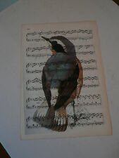 Vintage music sheet printed bird picture, wall art, antique, Wheatear