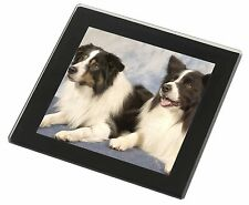 Border Collies Black Rim Glass Coaster Animal Breed Gift, AD-CO2GC