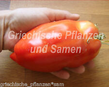 Howard German Riesen-Flaschen-Tomate tipologia di pomodori antica 10
