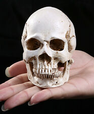 1pc Free shipping! Human Skull Replica Resin Model Medical Halloween prop mini