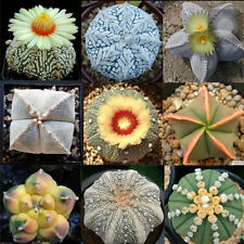 20pcs Mixed Astrophytum Cactus Seeds Succulents Plants Bonsai Seeds Home Garden