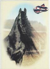 Horse Postcard -Friesian Head Study - Love that Mane