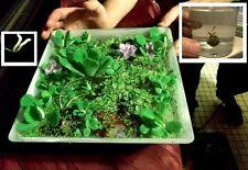 Wassergarten / Pflanzen für das Fensterbrett Büropflanzen die Diele den Hausflur