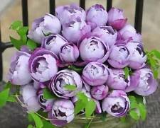 50 Pcs Round Purple Rose Flower Seeds Garden Plant Rose Flower Seed Home New