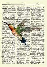 Hummingbird Dictionary Art Print Vintage Picture Poster Nature Wall Hanging