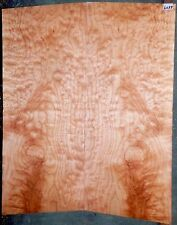 Quilted Maple EXIBITION Grade 5A CARVED Top Guitar Wood  #6057