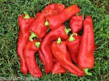 GIANT ACONCAGUA PEPPER 25 SEEDS VERY LARGE FRUITS GOOD IN SALAD, STUFFED OR....