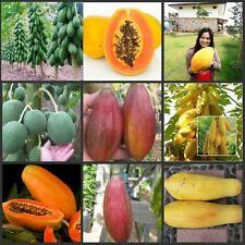 10 Seeds Mixed Papaya Varieties Thailand Imported Good growing Papaya Seeds