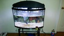 Fish tank with 3 fresh water fishes , food and filter