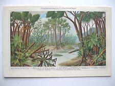 stampa antica old print PIANTE ACQUATICHE ALBERI  - GERMANY 1923