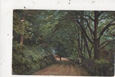 Cwm Woods Aberystwyth J&J Gibson 1904 Postcard 980a