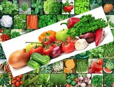 VEGETABLE HERB Garden VARIETY Lot ~Over 7,200 Fresh Seeds ~53 Varieties ~Non GMO