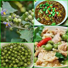 120 seeds Pea Eggplant Seed Vegetable Garden Healthy Turkey berry  From Thailand