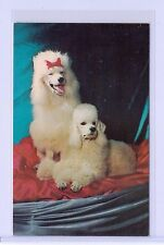 VINTAGE ALFRED MAINZER #856 POODLES PUPPY DOGS PORTRAIT POSTCARD NEW YORK USA