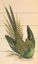 Art James Sowerby Parrot Ceramic Mural Backsplash Bath Tile #2146