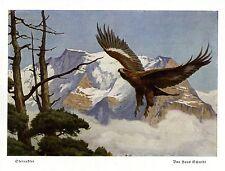 Steinadler *  Hans Schmidt 1936 * Jagdliche Grafik * Kunstdruck