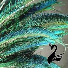 Feather Peacock Sword - Natural 80-90cm (Pack of 10) - Craft Millinery Fly Fishi